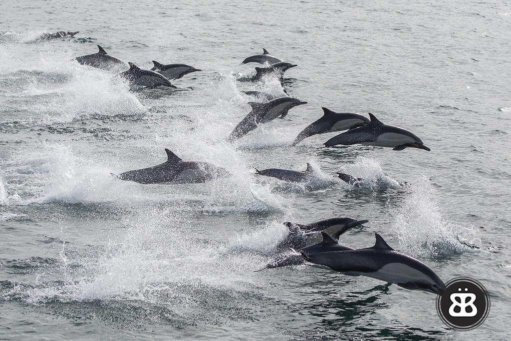 Dolphin Stampede 3
