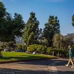 Barnsdall Art Park: A Walk in the Park