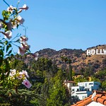 Hollywood Sign From Beachwood Canyon #1