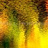 08-FallFoliage-022