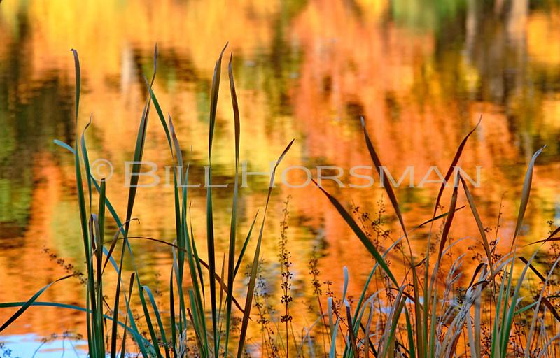 Reeds near Jamaica Pond 1993