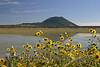 Sunflowers and Capulin Volcano IMG_4005