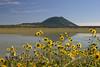 Sunflowers and Capulin Volcano IMG_4005