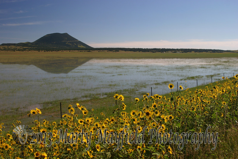 Sunflowers and Capulin Volcano IMG_4009