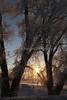 frosty sunrise_7277