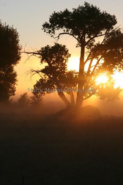 Sunrise Fog near Springer NM_005