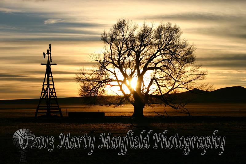 Windmill and Cottonwood Sunset 0380