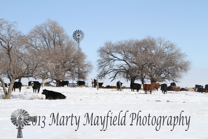 Windmill and Cows_7318