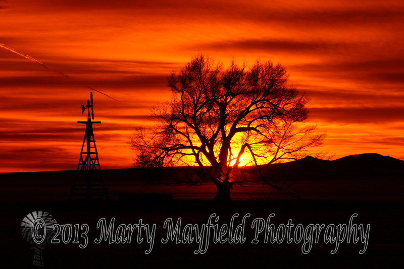 Windmill and Cottonwood Sunset 0382