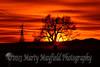 Windmill and Cottonwood Sunset 0382