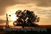 Windmill and cottonwood sunset IMG_4035