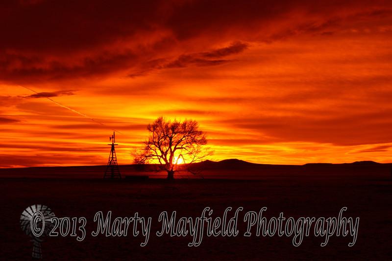 Windmill and Cottonwood Sunset 0383