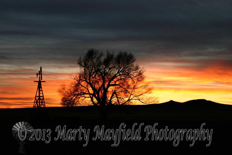 Windmill and Cottonwood Sunset 0397