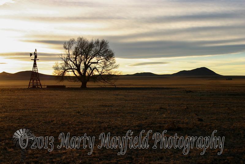 Windmill and Cottonwood Sunset 0378
