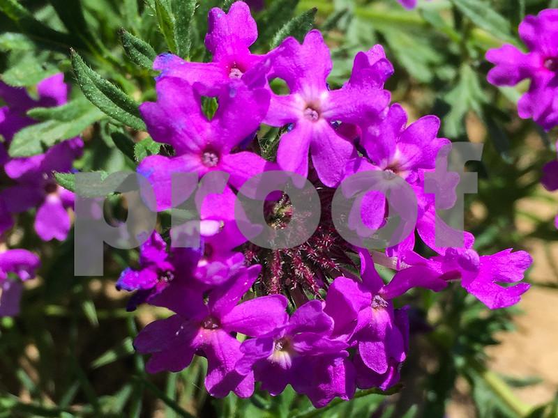 Moss Verbana_0338