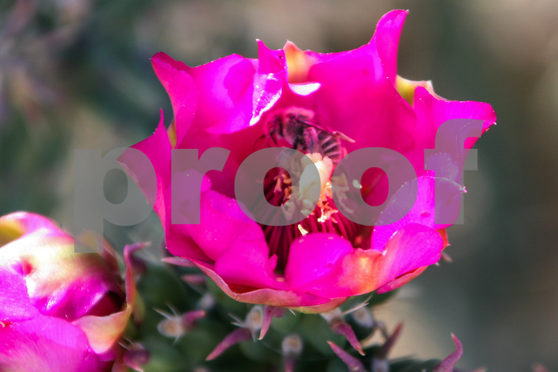 Tree Cactus Flowers_023