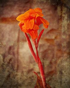 Textured Flower 3