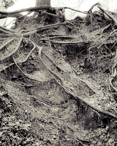 Abundance of Roots