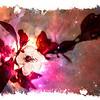 CherryBlsm-12164-Edit-2