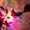 CherryBlsm-12164-nebulaplanet-2