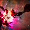 CherryBlsm-12164-nebulaVin-2 copy