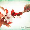 CherryBlsm-12164-Edit