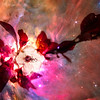 CherryBlsm-12164-nebula-2 copy