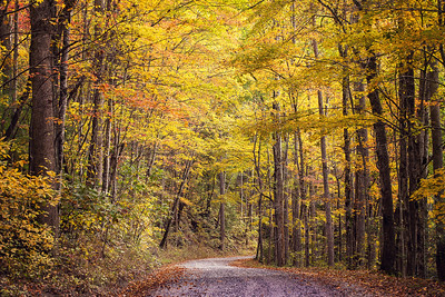 Dirt Road in the Tremont area of the Great Smoky Mountains National Park