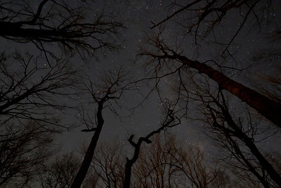 Stars through the trees, taken along the Appalachian Trail near Roan Mountain Tennessee