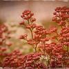 Wildflower-0252-1