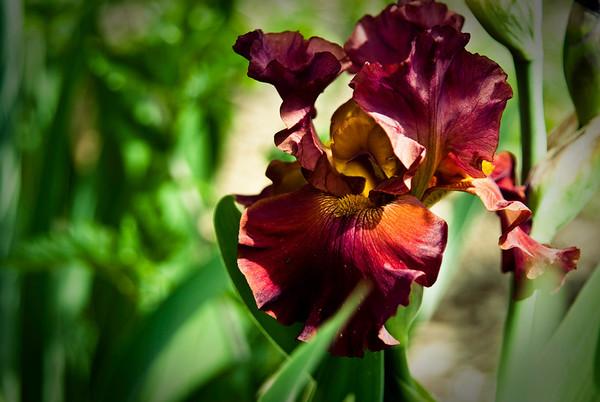 Fine Art Photography: Flowers