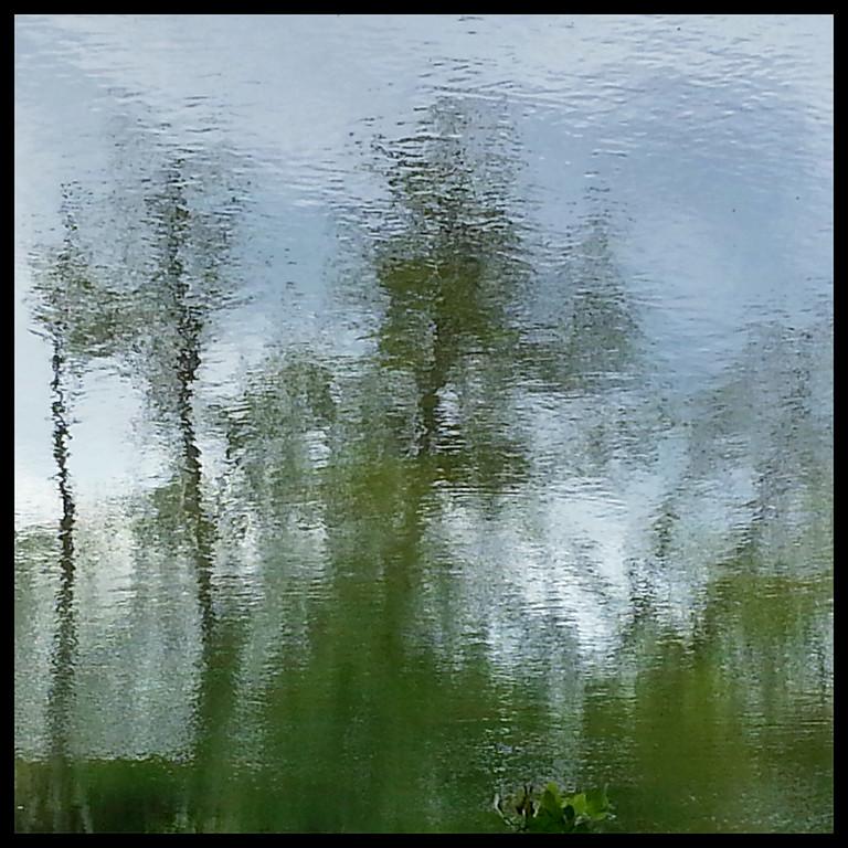 Cottonwood Reflections