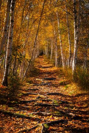 Hemlock Trail, Acadia