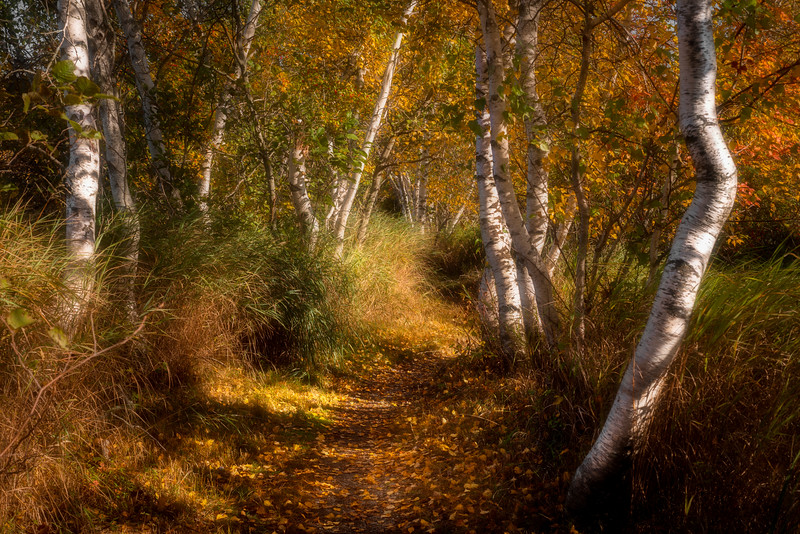 Hemlock Trail, Acadia National Park