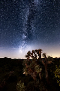Joshua Tree by Milky Way and Brush Fire Light