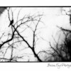 black trees V-fulllayers-1