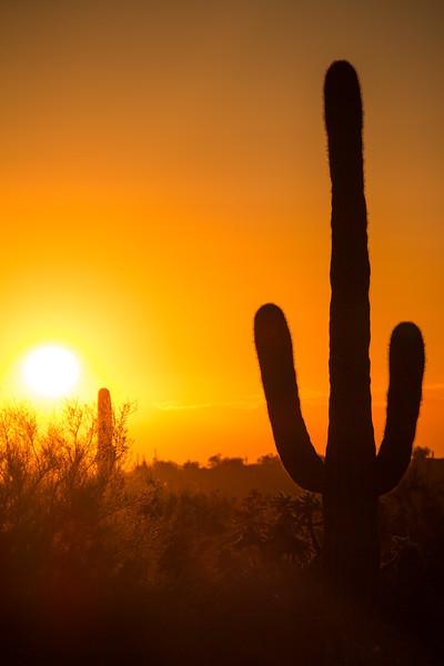 Lost Dutchman State Park, Apache Junction Arizona