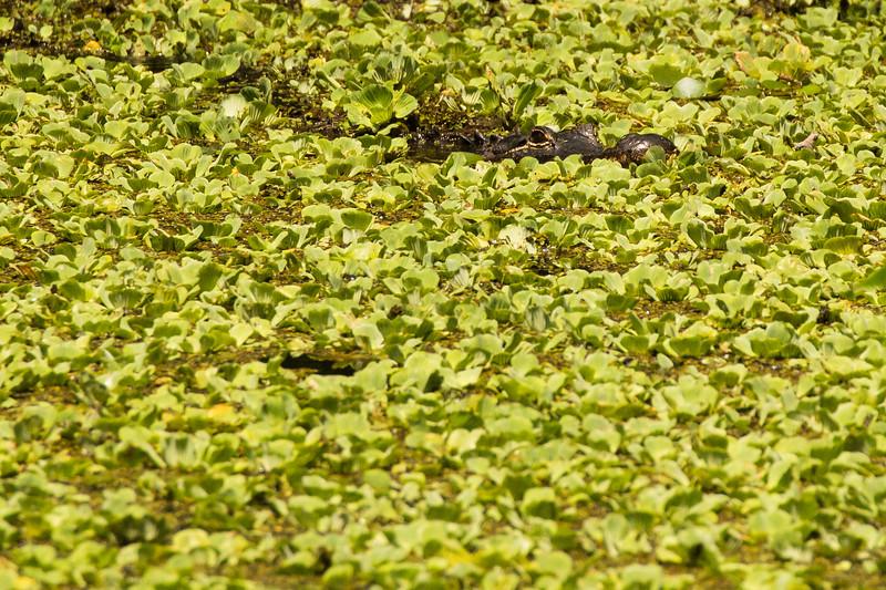 Corkscrew Swamp Sanctuary, Naples, Florida, USA