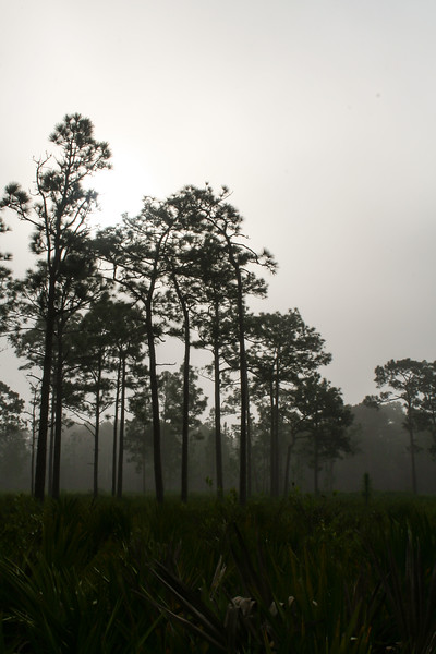 Jay B. Starkey Wilderness Park, New Port Richey, Florida, USA