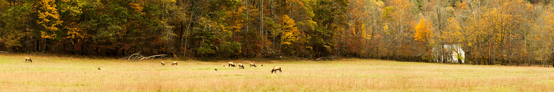 Cataloochee Valley, Great Smoky Mountains National Park, North Carolina, USA