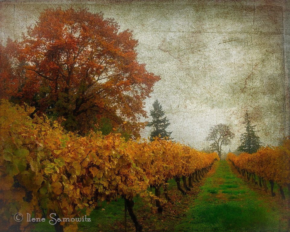 1-8-14 Willamette, OR vineyard.  The day was pouring and foggy and the sky was blown out so I used this beautiful texture to heighten  the moodiness of the image and to give it additional depth. I think it adds a painterly feeling as well. <br /> <br /> Thanks for making my shot of Ona Beach number one.