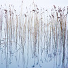 Reeds in Blue<br /> <br /> Mid-winter, reeds, reflections and a semblance of blue