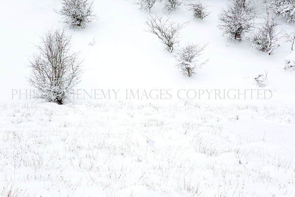 Hawthorn Winter<br /> <br /> A special tree, to me, and looking even more splendid contrasted by the pure driven snow!