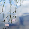 Two Pads<br /> <br /> Lily pads and water reeds - less is sometimes more.