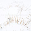 Grasses<br /> <br /> A lot of snow but not quite enough to cover these grasses, thankfully, I love the simply constructed feel of this