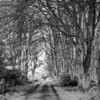 Broad Avenue<br /> <br /> Through the trees and along the lane.....this is where all fairy tales commence