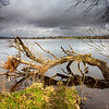 Washed-Up..........<br /> <br /> ................on the banks of Loch Ken