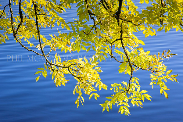 Blue and Yellow<br /> <br /> The waters of Loch Ken contrasted by the yellows of autumn