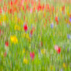Meadow (i)<br /> <br /> Remember summer, remember the colour, remember the buzz - it'll be here soon enough once again