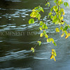 Fragment<br /> <br /> The river doesn't let up and neither do the seasons - they flow on